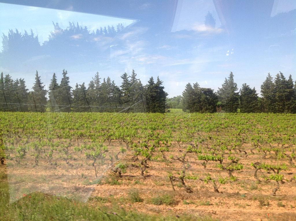 Des belles vignes sur la route.