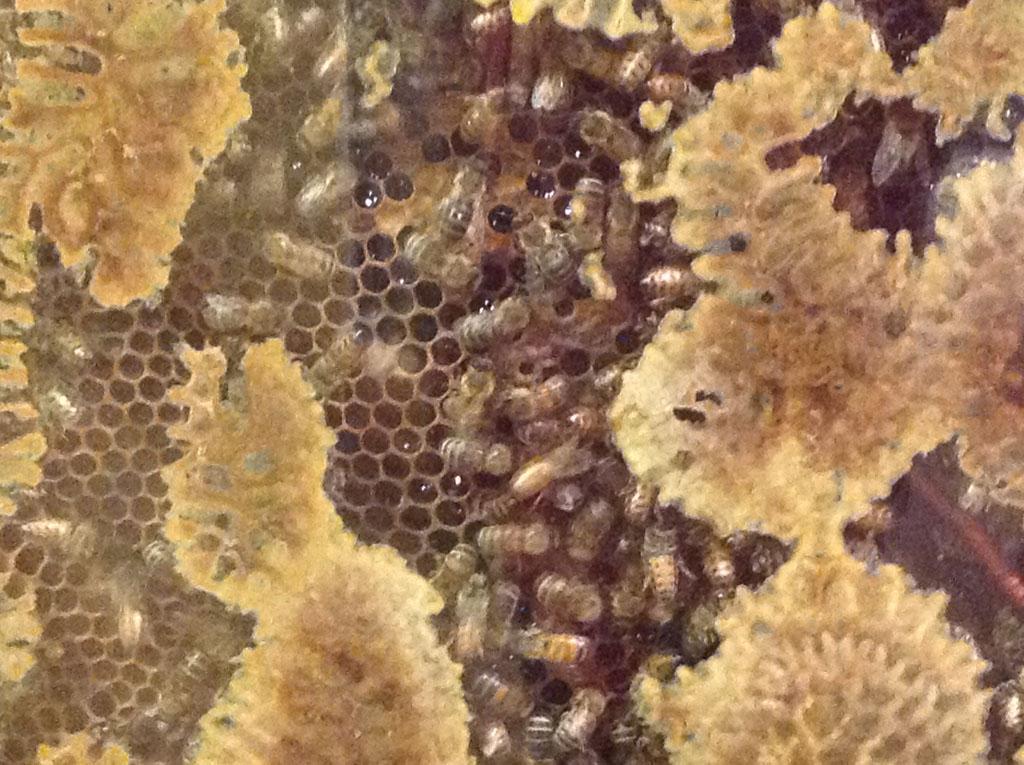 Les abeilles n'arrêtant pas de s'agiter.... La photo est floue !