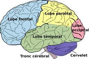 les 7 et 14 mars, A chacun son cerveau, par Anne BEAUMANOIR
