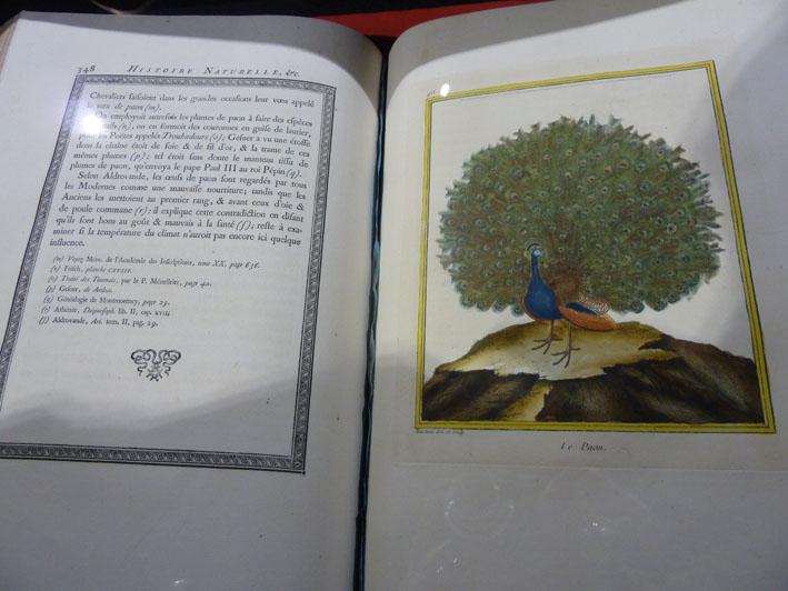 Magnifique paon de l'encyclopédie d'histoire naturelle de Buffon.